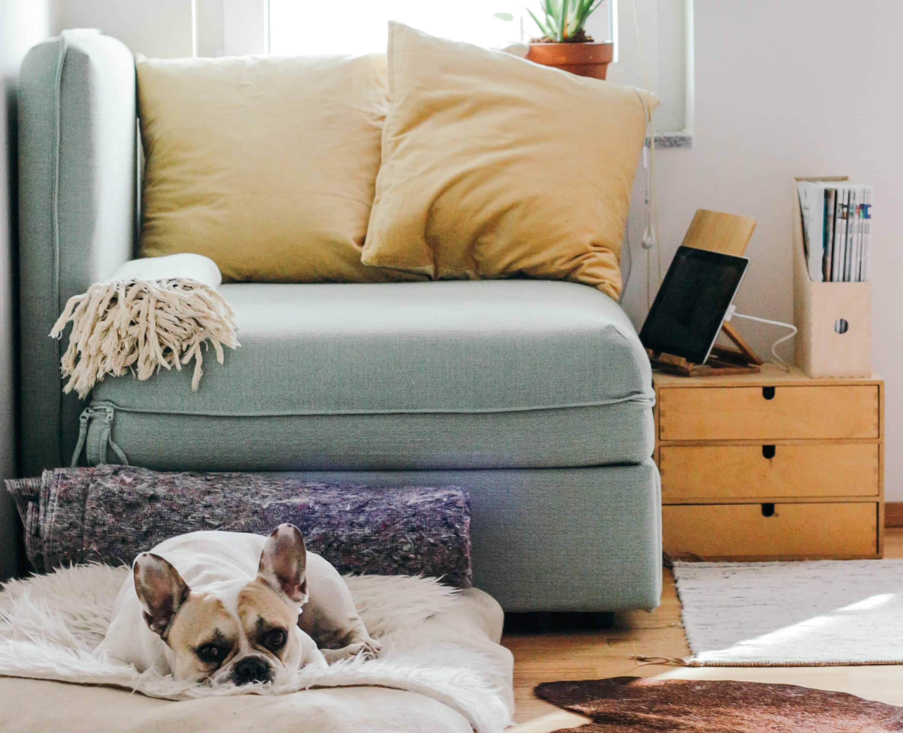 hund-pollenallergie