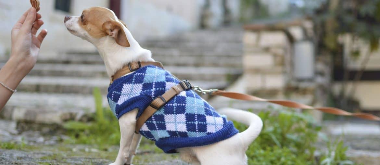 Süßer Hund mit Leckerlie