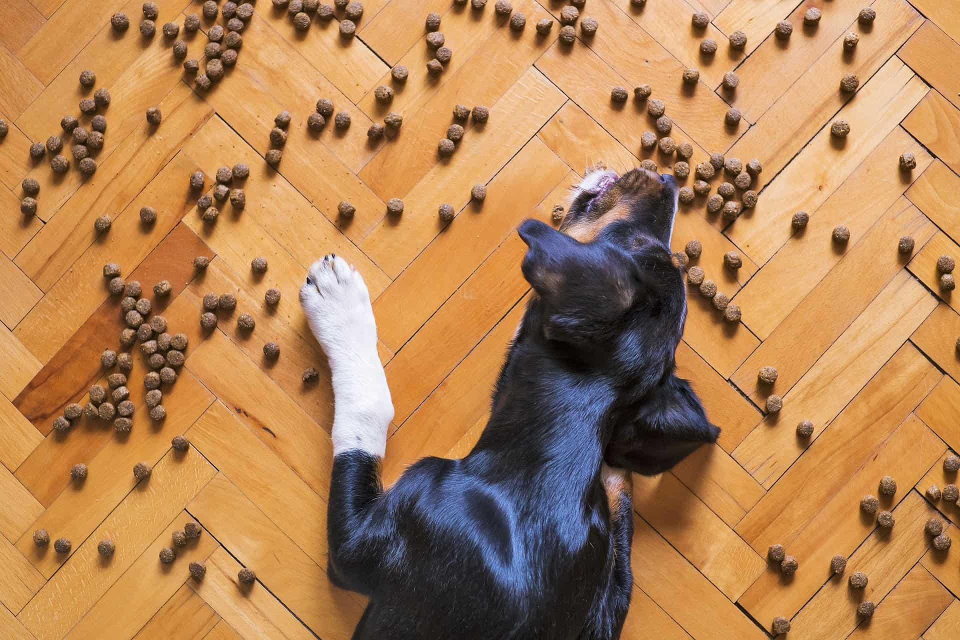 Olivenöl Hund