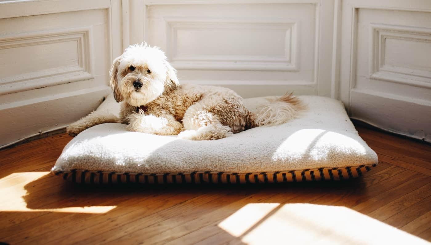 Ästhetisches Hundebett