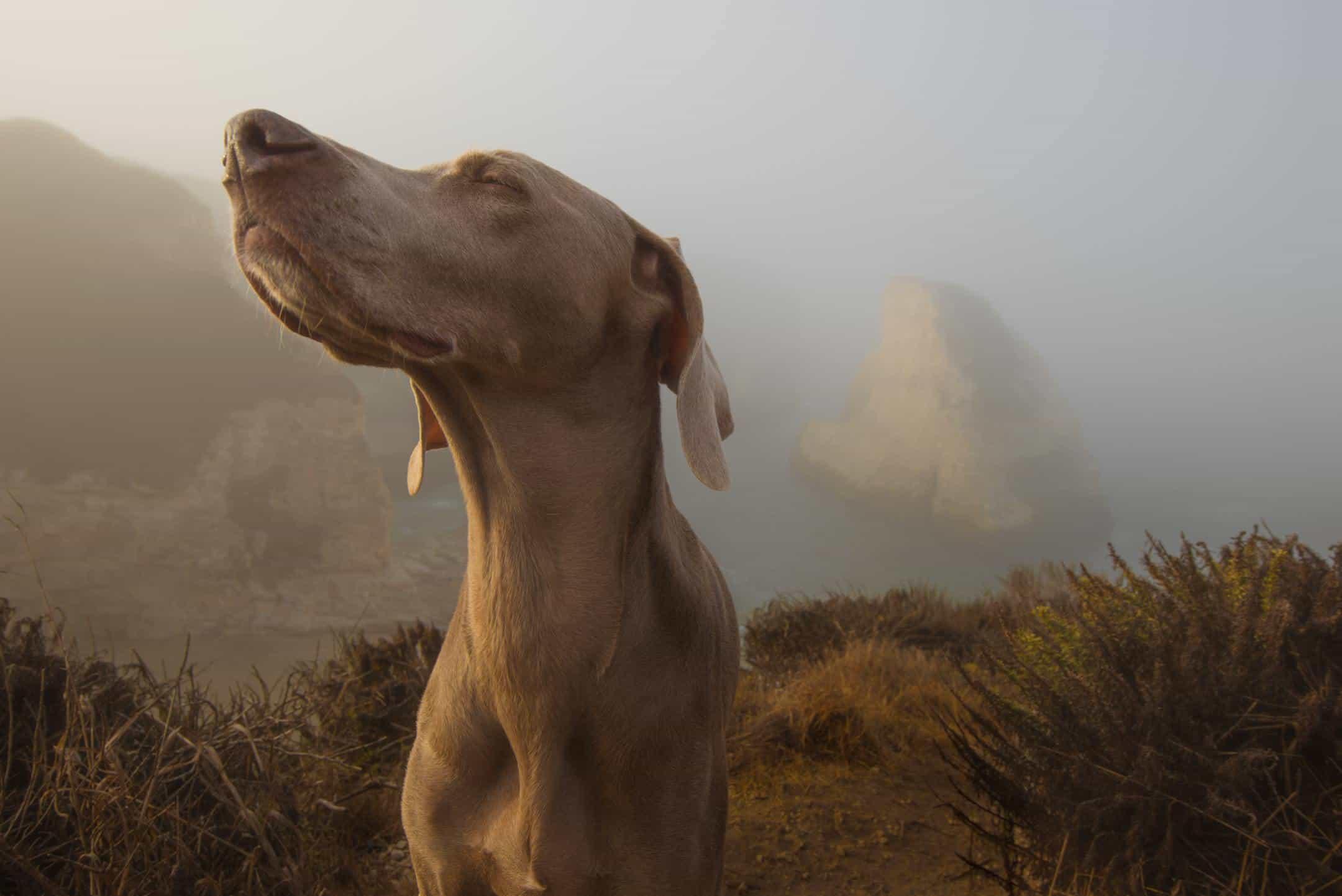 Schwrazkümmelöl Hund